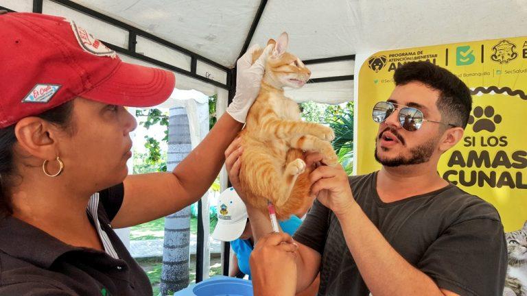 Vacunación mascotas