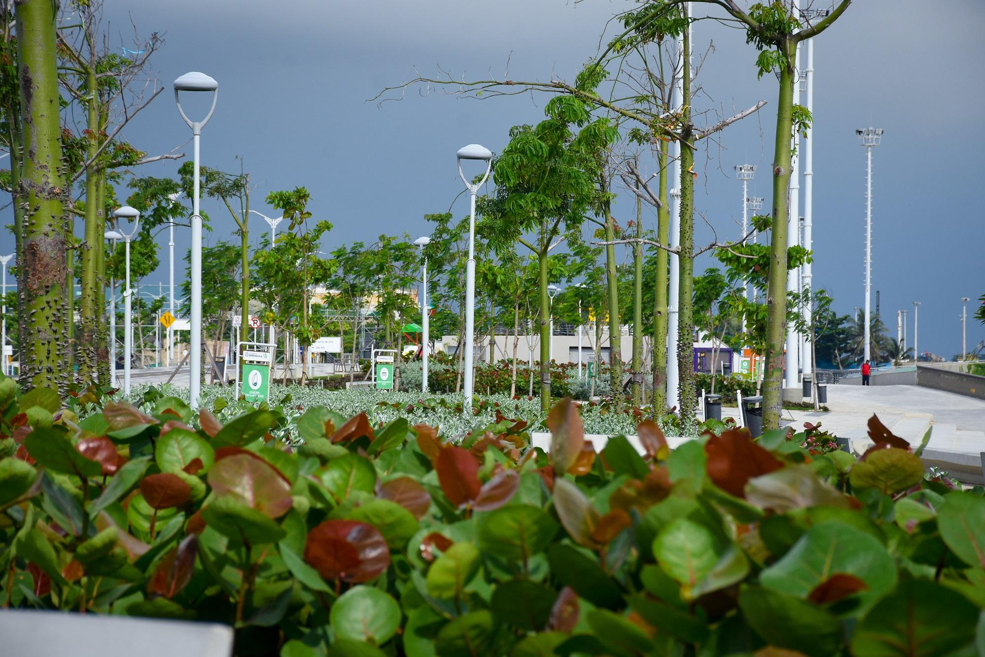 rboles Barranquilla - Siembra Barranquilla - Bosques Urbanos