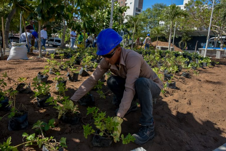 Siembra Barranquilla - Árboles - Ciudades Arboladas del Mundo